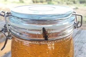 熬制过的假蜂蜜有气泡吗没有气泡的蜂蜜是假的吗